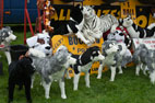 The Reeth Show (2011)